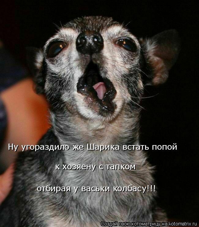 Котоматрица: Ну угораздило же Шарика встать попой  к хозяену с тапком  отбирая у васьки колбасу!!!