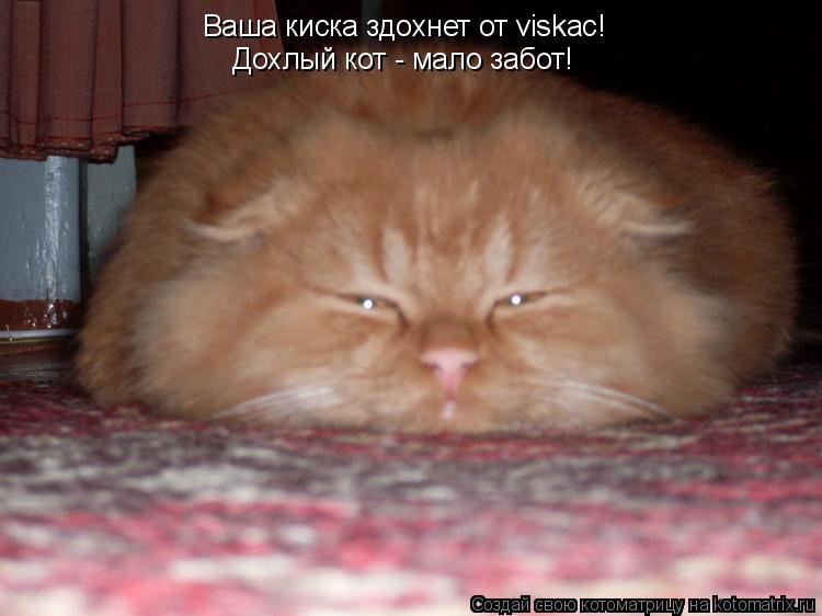 Котоматрица: Ваша киска здохнет от viskac! Дохлый кот - мало забот!