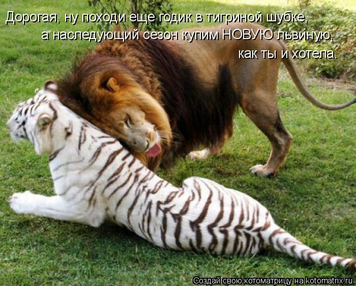 Котоматрица: Дорогая, ну походи еще годик в тигриной шубке, а наследующий сезон купим НОВУЮ львиную, как ты и хотела.