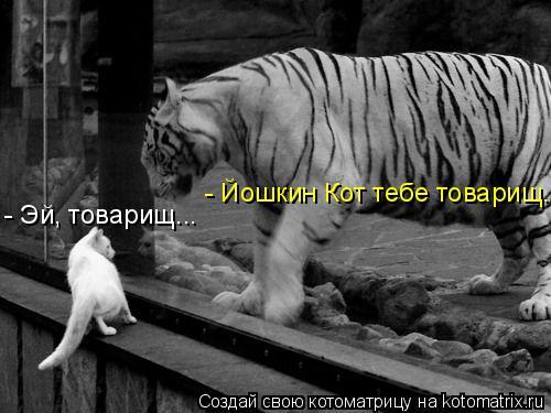 Котоматрица: - Эй, товарищ... - Йошкин Кот тебе товарищ...
