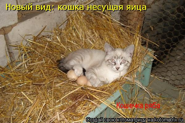 Котоматрица: Новый вид: кошка несущая яица Кошечка ряба