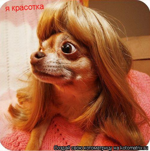 Котоматрица: я красотка