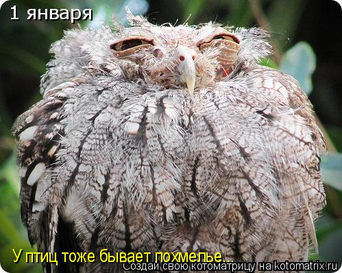 Котоматрица: 1 января У птиц тоже бывает похмелье...