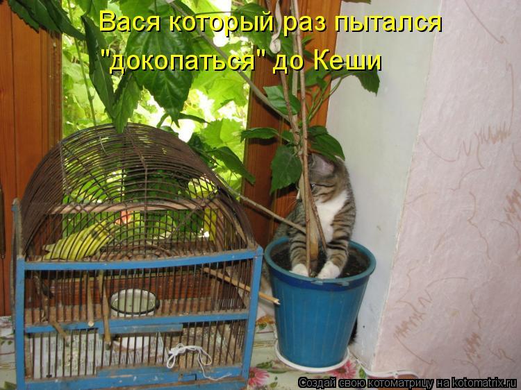 """Котоматрица - Вася который раз пытался """"докопаться"""" до Кеши"""
