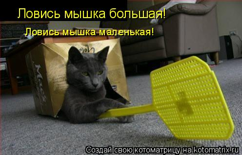 Котоматрица: Ловись мышка большая! Ловись мышка маленькая!