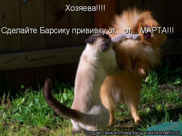 Котоматрица: Хозяева!!!!  Сделайте Барcику прививку от... от... МАРТА!!!