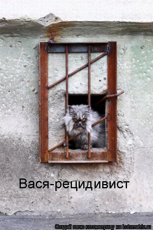 Котоматрица: Вася-рецидивист