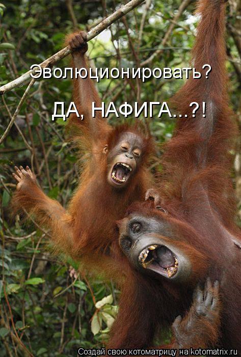 Котоматрица: Эволюционировать? ДА, НАФИГА...?!