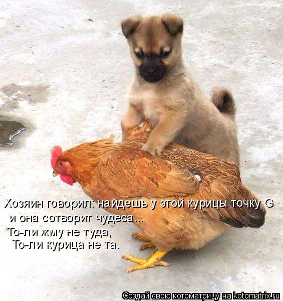 Котоматрица: Хозяин говорил: найдешь у этой курицы точку G и она сотворит чудеса... То-ли жму не туда,  То-ли курица не та.