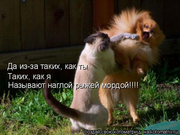 Котоматрица: Да из-за таких, как ты Таких, как я Называют наглой рыжей мордой!!!!
