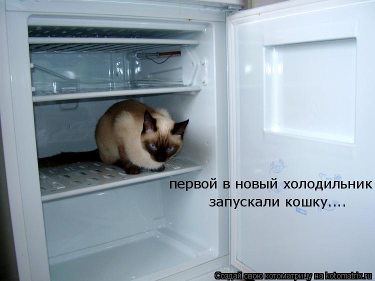Котоматрица: первой в новый холодильник  запускали кошку....