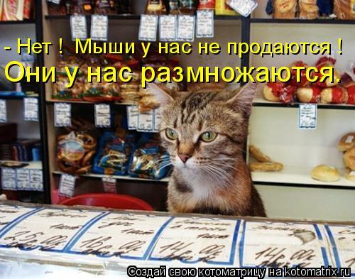 Котоматрица: - Нет !  Мыши у нас не продаются ! Они у нас размножаются.