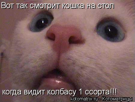 Котоматрица: Вот так смотрит кошка на стол когда видит колбасу 1 ссорта!!!
