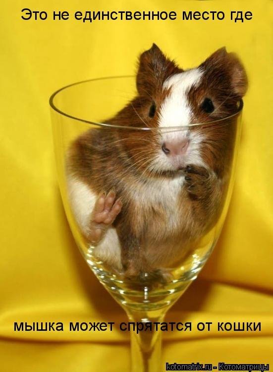 Котоматрица: Это не единственное место где мышка может спрятатся от кошки