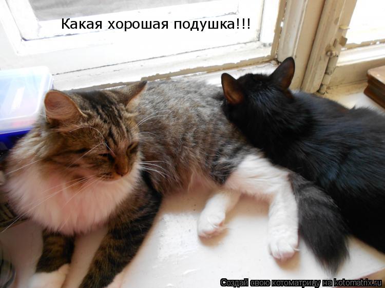 Котоматрица: Какая хорошая подушка!!!