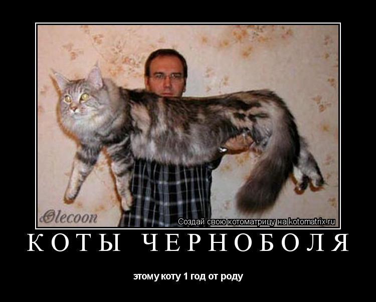 Котоматрица: КОТЫ ЧЕРНОБОЛЯ этому коту 1 год от роду