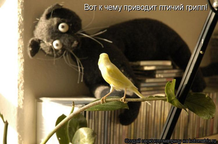 Котоматрица: Вот к чему приводит птичий грипп!