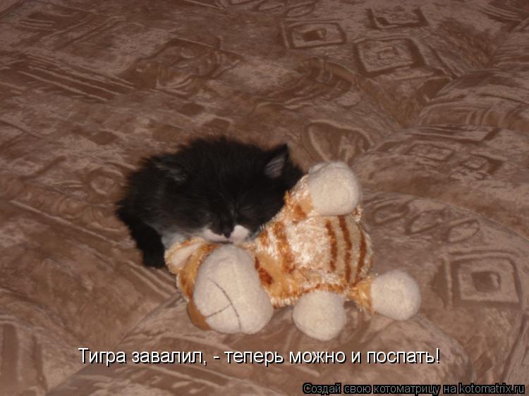 Котоматрица: Тигра завалил, - теперь можно и поспать!