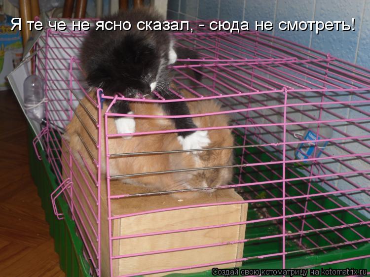 Котоматрица: Я те че не ясно сказал, - сюда не смотреть!