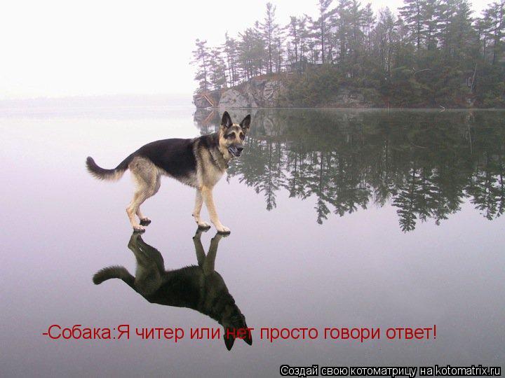 Котоматрица: -Собака:Я читер или нет просто говори ответ!