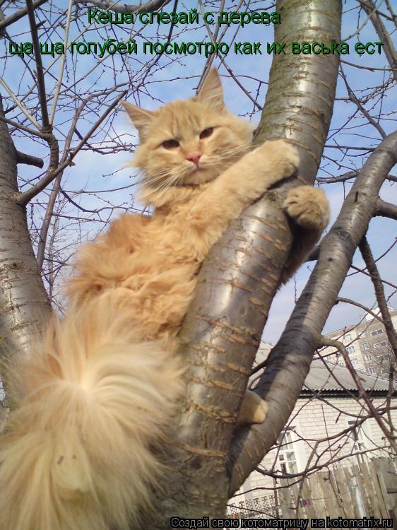 Котоматрица: Кеша слезай с дерева  ща ща голубей посмотрю как их васька ест