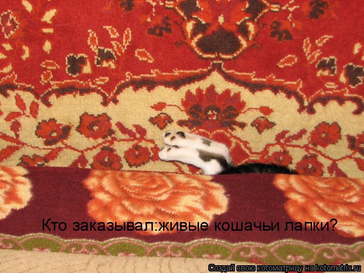 Котоматрица: Кто заказывал:живые кошачьи лапки?