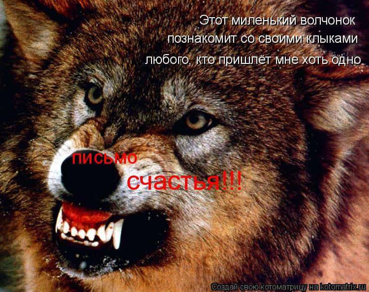 Котоматрица: Этот миленький волчонок письмо счастья!!! познакомит со своими клыками любого, кто пришлёт мне хоть одно