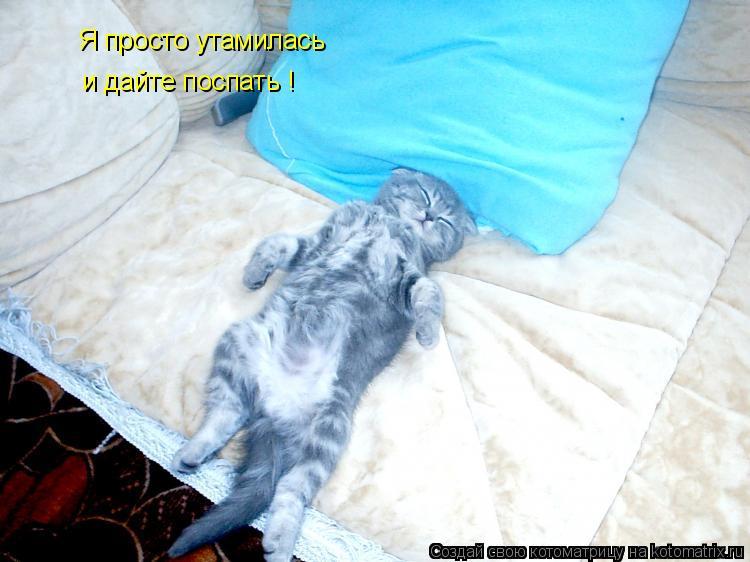 Котоматрица: Я просто утамилась и дайте поспать !