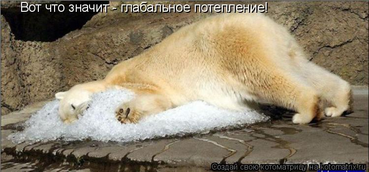 Котоматрица: Вот что значит - глабальное потепление!