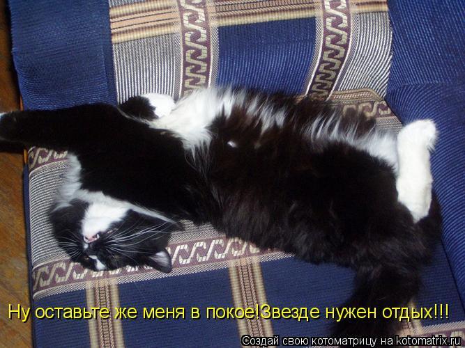 Котоматрица: Ну оставьте же меня в покое!Звезде нужен отдых!!! Ну оставьте же меня в покое!Звезде нужен отдых!!!