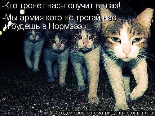 Котоматрица: -Кто тронет нас-получит в глаз! -Мы армия котэ,не трогай нас  и будешь в Нормэээ!