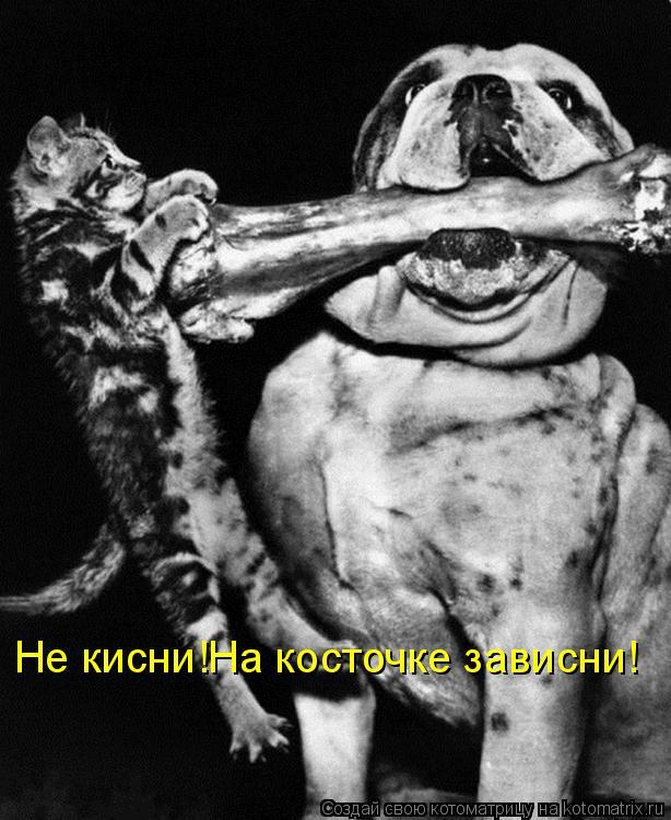 Котоматрица: Не кисни!На косточке зависни!