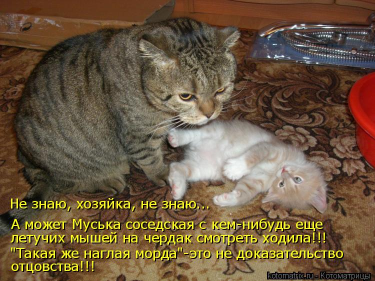 Котоматрица - А может Муська соседская с кем-нибудь еще  летучих мышей на чердак смо