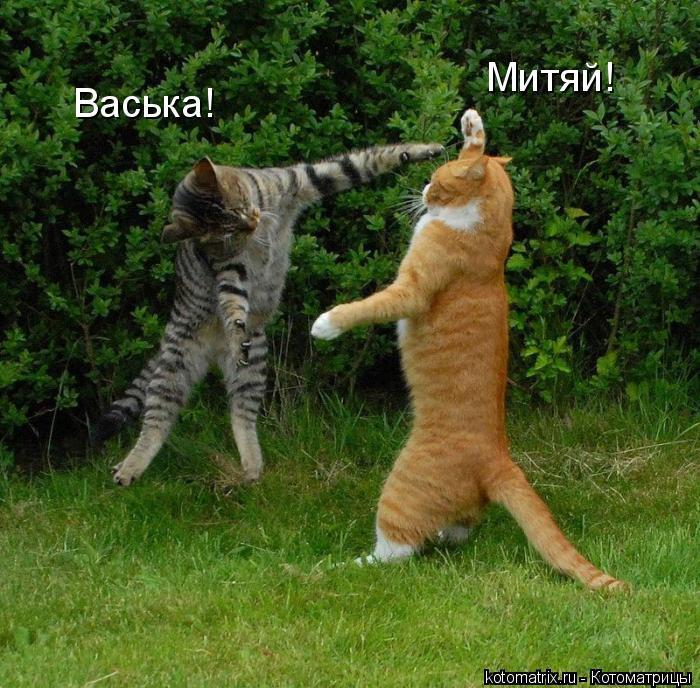 Котоматрица: Васька! Митяй!