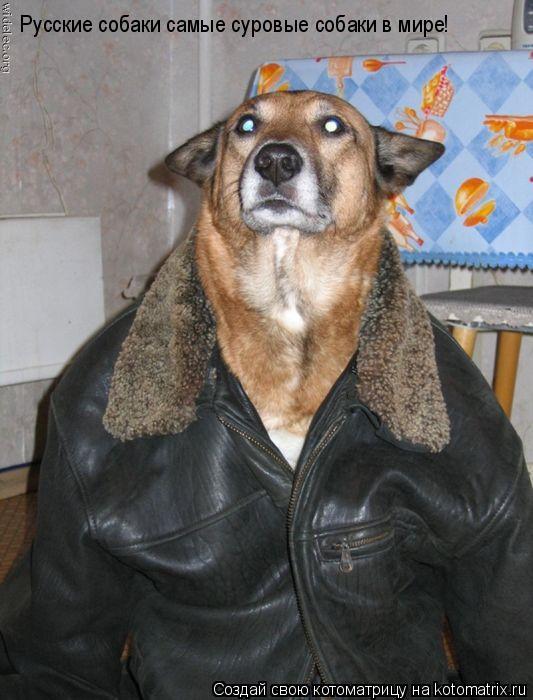 Котоматрица: Русские собаки самые суровые собаки в мире!