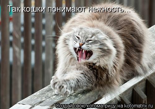 Котоматрица: Так кошки понимают нежность...