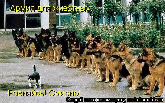 Котоматрица: Армия для животных: -Ровняйсь! Смирно!