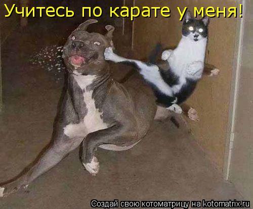 Котоматрица: Учитесь по карате у меня!