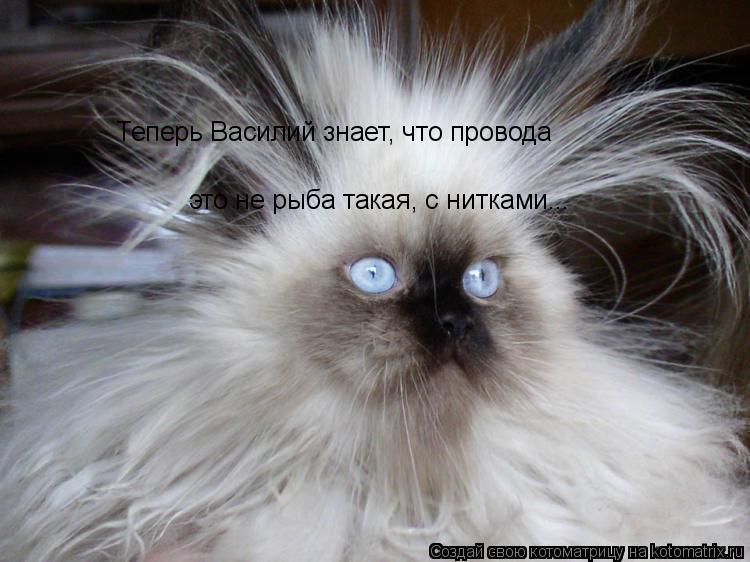 Котоматрица: Теперь Василий знает, что провода это не рыба такая, с нитками...