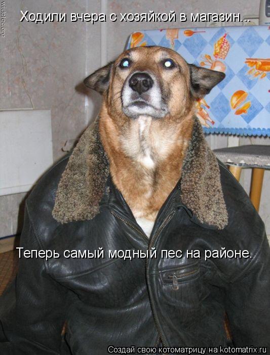 Котоматрица: Ходили вчера с хозяйкой в магазин... Теперь самый модный пес на районе.