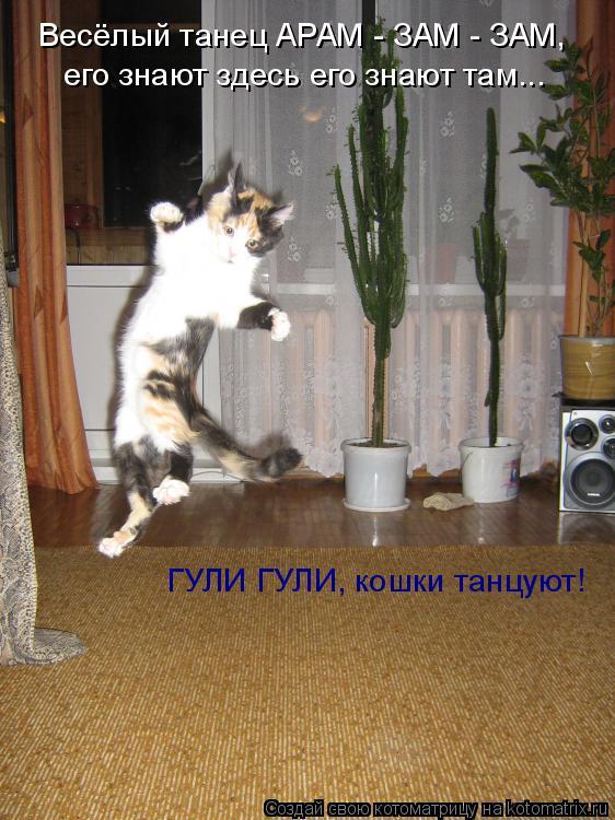 Котоматрица: Весёлый танец АРАМ - ЗАМ - ЗАМ, его знают здесь его знают там... ГУЛИ ГУЛИ, кошки танцуют!