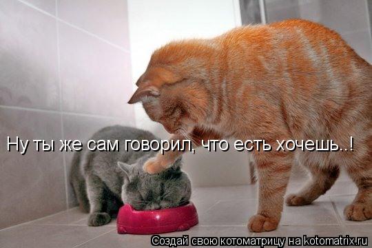Котоматрица: Ну ты же сам говорил, что есть хочешь..!
