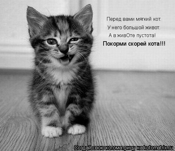 Котоматрица: Перед вами мягкий кот. У него большой живот. А в живОте пустота! Покорми скорей кота!!!