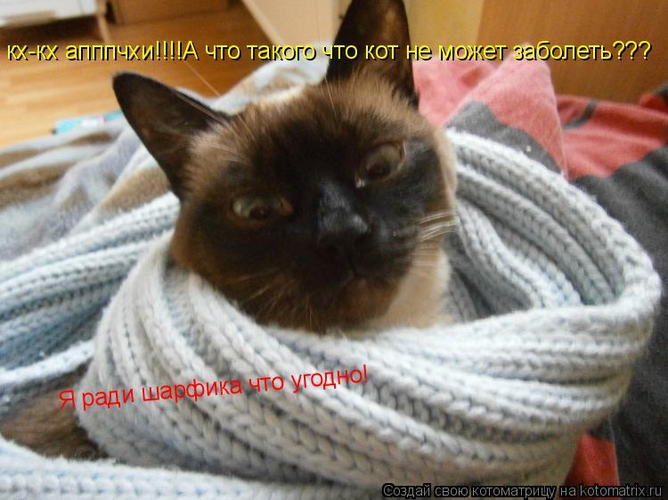 Котоматрица: кх-кх апппчхи!!!!А что такого что кот не может заболеть??? Я ради шарфика что угодно!