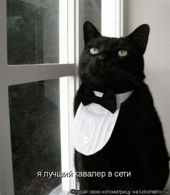 Котоматрица: я лучший кавалер в сети