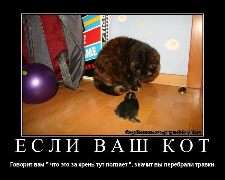 Если кот j i
