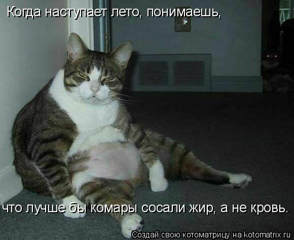 Котоматрица: Когда наступает лето, понимаешь,  что лучше бы комары сосали жир, а не кровь.