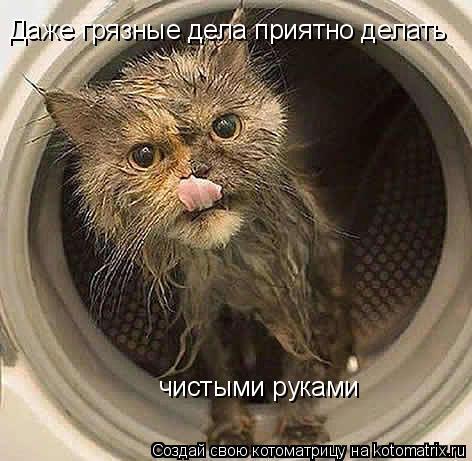Котоматрица: Даже грязные дела приятно делать чистыми руками