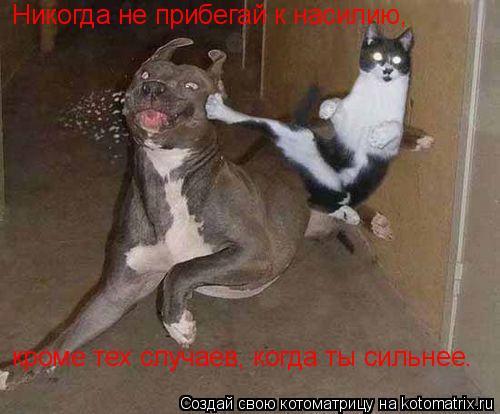 Котоматрица: Никогда не прибегай к насилию, кроме тех случаев, когда ты сильнее.
