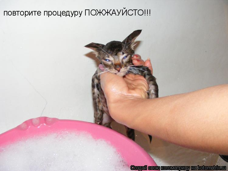 Котоматрица: повторите процедуру ПОЖЖАУЙСТО!!!